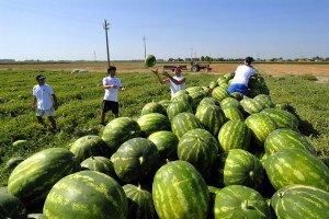 Amnesty International: rapporto sullo sfruttamento dei lavoratori migranti in agricoltura